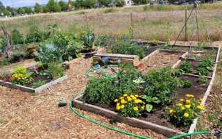 Некоммерческое садоводческое товарищество (СНТ) – что это